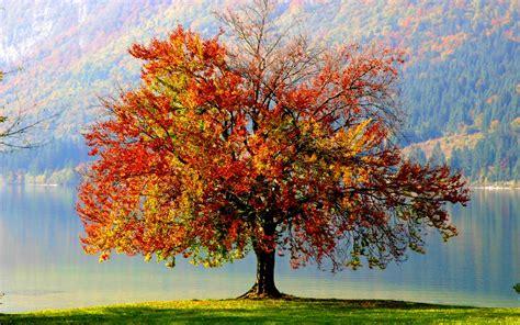 imagenes arbol otoño 193 rbol de oto 241 o fondos de pantalla 193 rbol de oto 241 o fotos