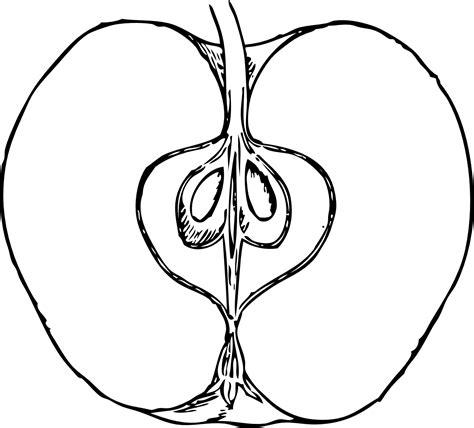 apple in cross section 1 black white line art tatoo tattoo