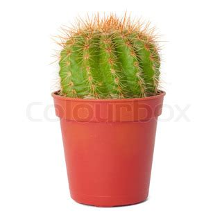 plants that can survive without light buy stock photos of cactus colourbox