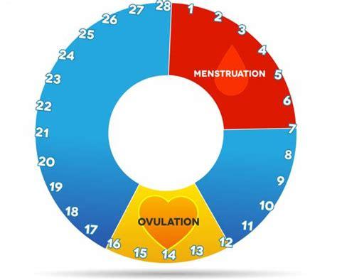 Telat Menstruasi Remaja Fase Dan Siklus Menstruasi Pada Wanita
