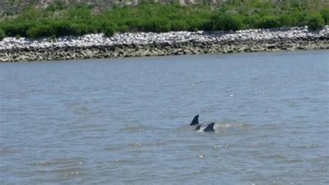 fan boat tours savannah dolphin magic tours llc savannah ga top tips before