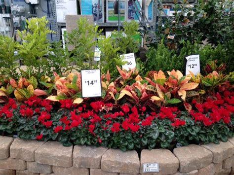 croton  cyclamen sevillefarms garden center displays