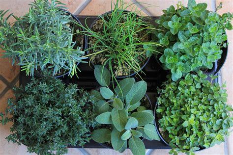 piante aromatiche in giardino piante aromatiche da giardino ecco le pi 249 ricercate le