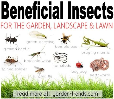 list of garden pests pin by dannielle on gardening