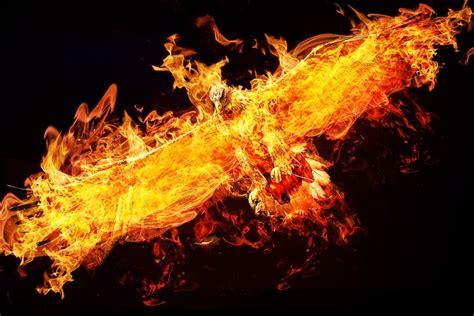 photo phoenix photoshop adler fire  image