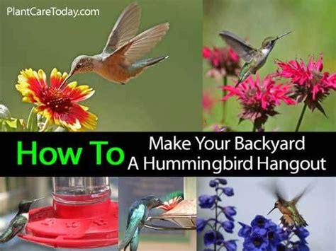 hummingbird garden how to make your backyard a hangout