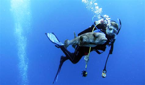 scuba dive equipment scuba diving equipment you should never be without