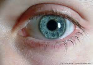 human eye color human original eye color brown hairs