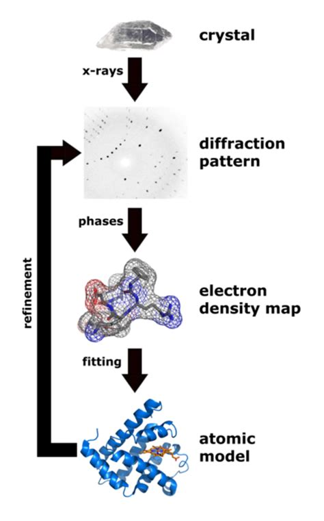 protein x crystallography x crystallography proteopedia in 3d