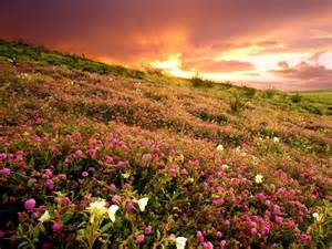 anza borrego bloom anza borrego state park in bloom where i want to go pinterest