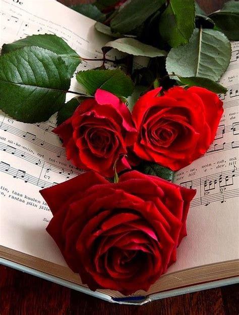 imagenes de rosas para descargar 20 im 225 genes de rosas rojas hermosas para descargar gratis