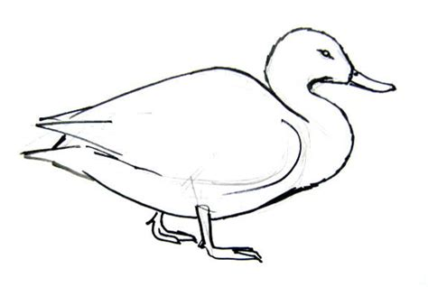 How To Draw Ducks how to draw a duck