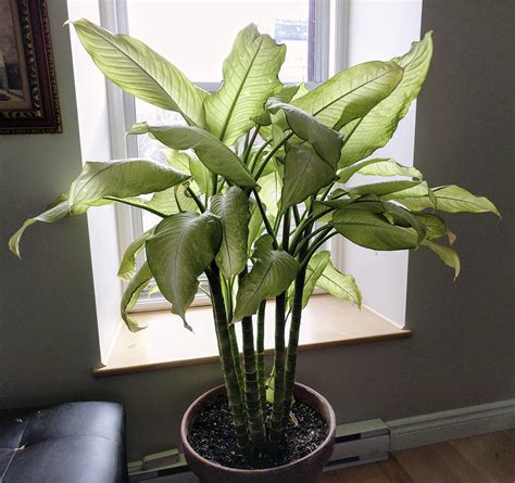 growing house plants  year  pleasure  daily world