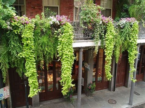 plants that drape 1000 images about balcony gardens on pinterest gardens