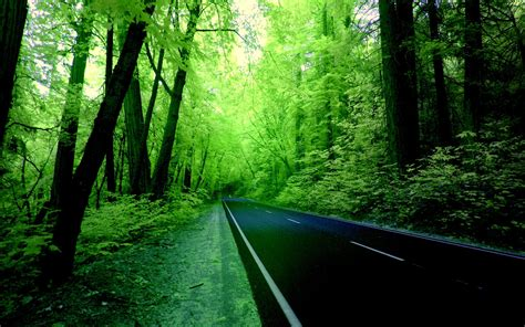 wallpaper of green forest green forest wallpaper hd background 9 hd wallpapers