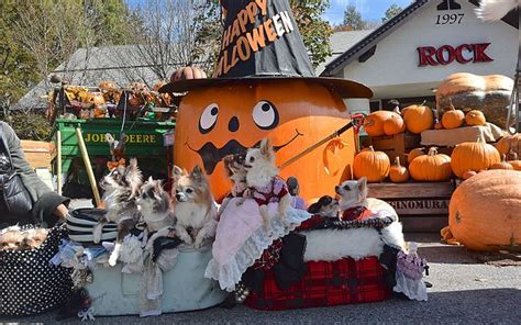 is pumpkin bad for dogs is your prepared for pumpkin show scioto post