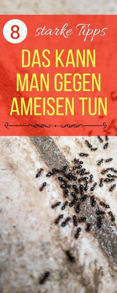Zimt Gegen Pilze Im Garten by Die Besten 25 Hausmittel Gegen Ameisen Ideen Auf