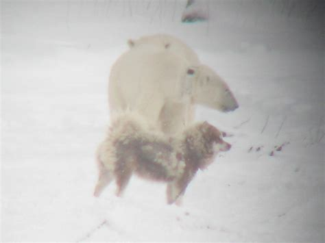 are dogs and bears related what are the opportunities the and the polar auto design tech