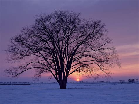 winter tree psych your mind seasonal affective disorder an extreme