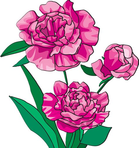 peony clipart peony clipart clipart best