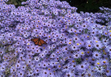 autumn garden flowers autumn garden plants that flower in october