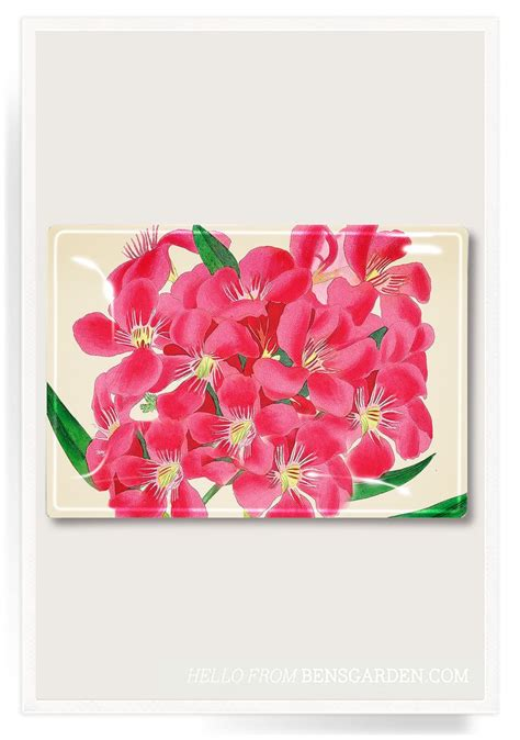 Glass Trays For Decoupage - today show tropical pink flower decoupage glass tray