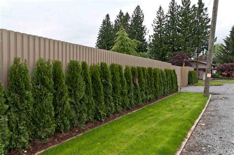 recinzioni giardini recinzioni giardino 25 idee fra legno metallo e piante