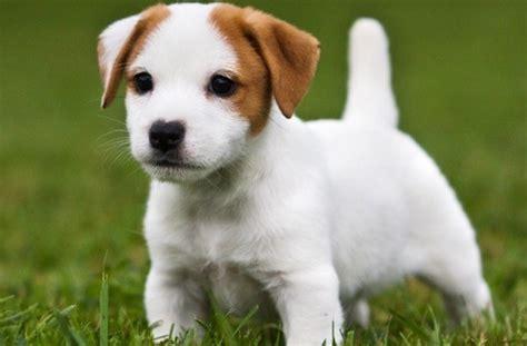 cagnolino piccolo da appartamento frasi sui cani