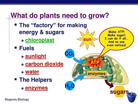 What Of Light Do Plants Need ppt photosynthesis from light and air powerpoint