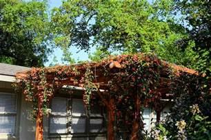 Midcentury Modern Bedroom - new braunfels home for sale com pergola on back patio