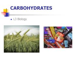 carbohydrates vocabulary worksheet carbohydrates manhasset schools