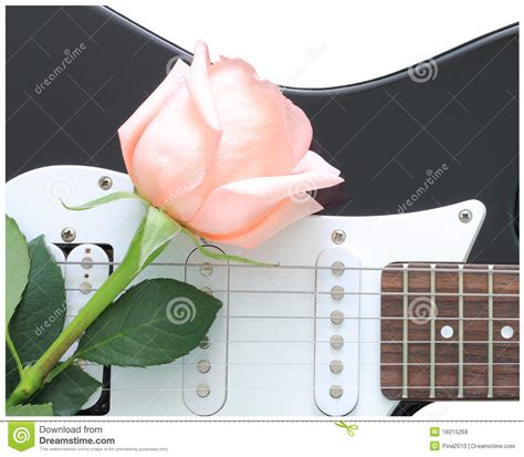 rose theme guitar rose guitar stock photo image of musical floral