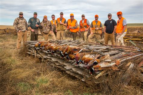 how to a to pheasant hunt meadow creek south dakota pheasant c perkins county lemmon sd pheasant