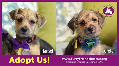 terrier mix puppies for adoption adopt us hansel gretel terrier mix puppies friends rescue