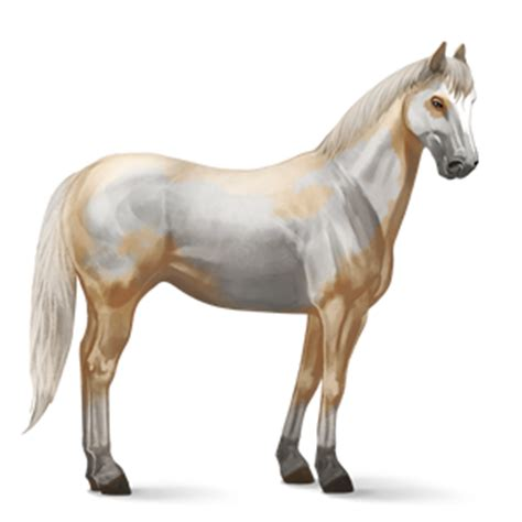 horse png image, free download picture, transparent background