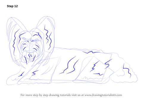 how to draw a yorkie puppy step by step learn how to draw a terrier farm animals step by step drawing tutorials
