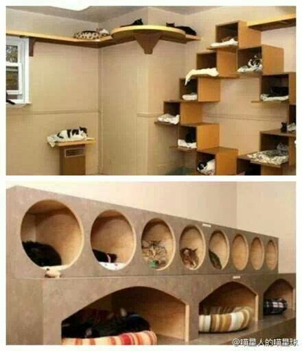cat rooms catification catification