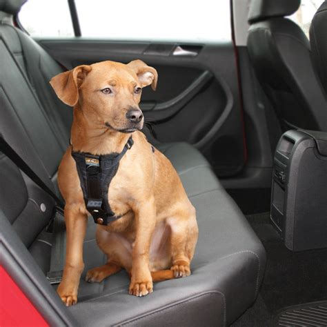 car harness for dogs car harness ancol car harness adapter best car all time best car all time
