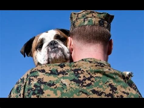 dogs welcoming soldiers home compilation 2013 new hd
