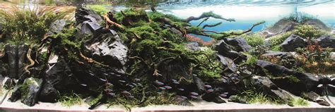 international aquatic plants layout contest 2014 ada malaysia