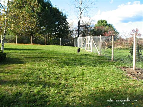 backyard fence for dogs peace in the yard 7 ways to dog proof your fence 171 dogs in need of space