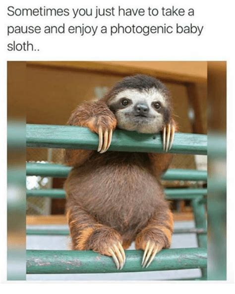 Baby Sloth Meme - sometimes you just have to take a pause and enjoy a