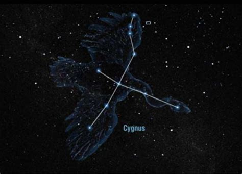 cygnus constellation deneb alpha cygni α cygni α cyg