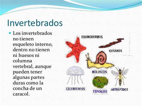 imagenes de animales invertebrados acuaticos los animales vertebrados e invertebrados