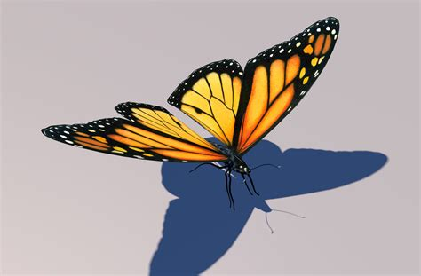 Monarch Butterfly Animation 3d Model Butterfly 3d Animation