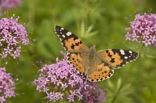 vari 233 t 233 s de papillons du jardin