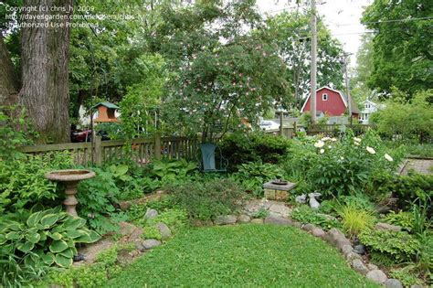 small shade garden ideas small shade garden ideas photograph garden design chris h