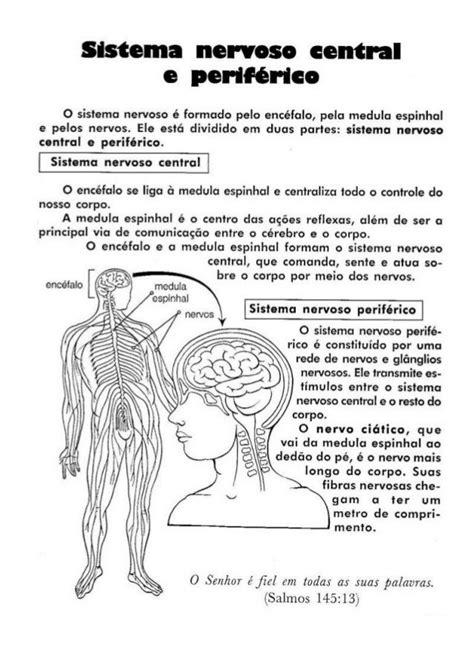 220 atividades de_ciências_-_4ª_série[1] | Sistema nervoso