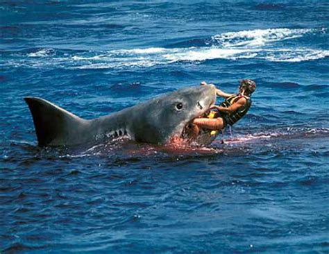 white sharks eating people latest images/pictures 2013