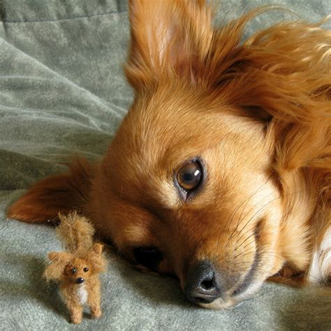 pics of long hair dark browm terriers needle felted long haired chihuahua miniature needle